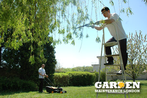 Garden Preparation And Weeding London